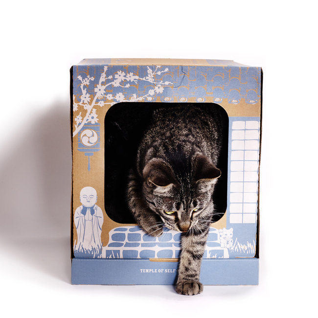 litiere chat jetable toilettes