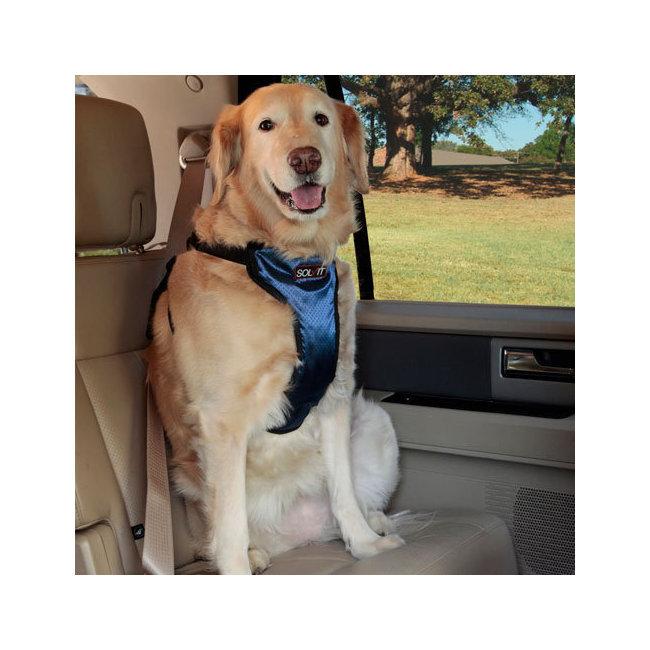 nouveaut s harnais de s curit pour voiture albert le chien. Black Bedroom Furniture Sets. Home Design Ideas
