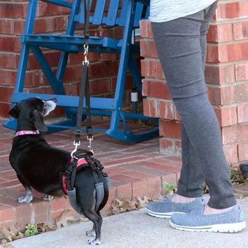 Modes de transport pour petits / vieux chiens qui fatiguent vite - Page 8 Harnais-de-levage-arriere-pour-chien