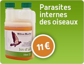parasites internes des oiseaux jus d'ail naturel