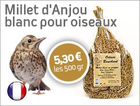 millet d'anjou blanc pour oiseau origine France
