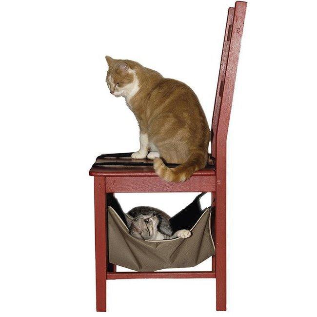 jouet panier toilettage collerette tapis collier laisse hamac calin pour chat albert. Black Bedroom Furniture Sets. Home Design Ideas