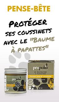 baume de protection des pattes chien et chat